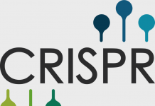 Can Microsoft Improve the Accuracy of CRISPR Through the Use of AI